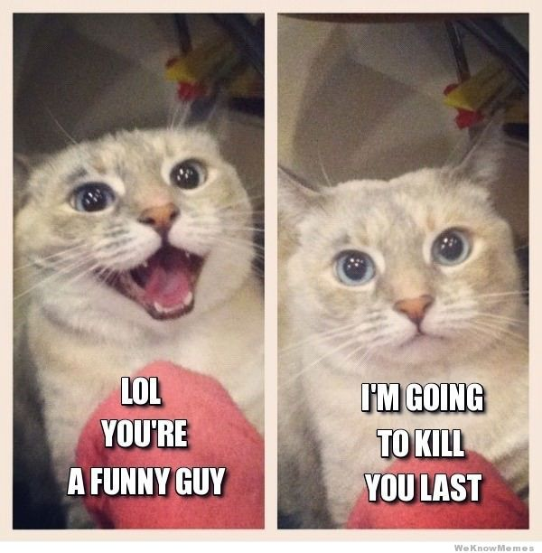 Lol-youre-a-funny-guy-cat