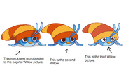 Theory of Willow Mutations