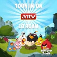 Angry Birds Toons antv