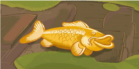 Gold Koi Fish
