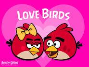 Lovebird2