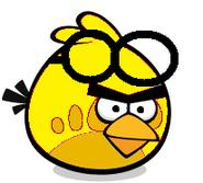 Yellow Goggle Bird