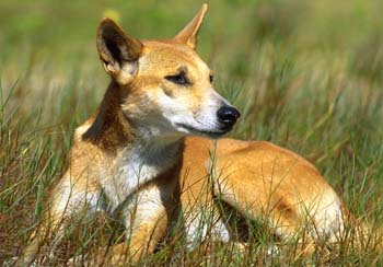 File:Animal central wikia early dog photo.jpg