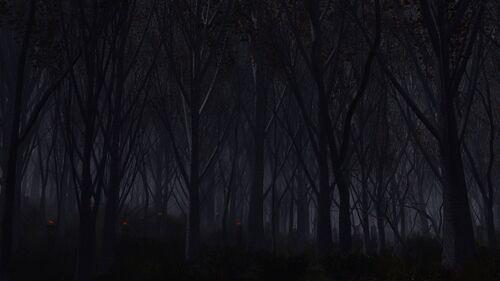 46900230-dark-forest