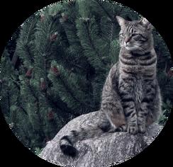 459576-cats-cat-and-nature-wallpaper