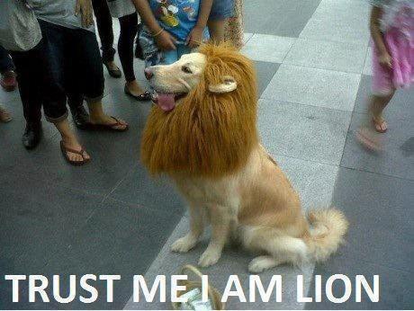 File:Dog lion meme.png