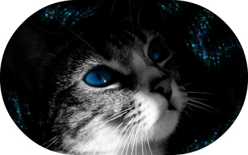 123animal-blue-eye-cat-backgrounds-wallpapers