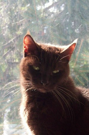 My brown cat by Punk Rock Michelle