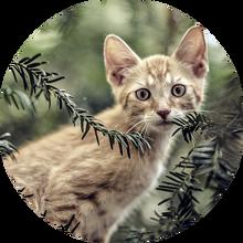 Cat-1716838 960 720