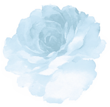 Flower nobg reflect