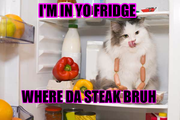 File:SteakCat.png