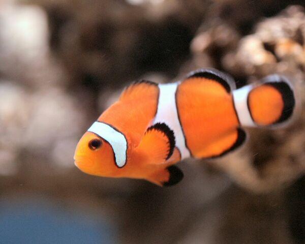 File:Fish-2.jpg