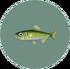 Sweetfish (City Folk)