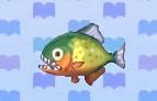 Piranha encyclopedia (New Leaf)