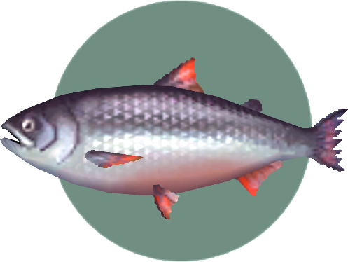 File:King Salmon (City Folk).png