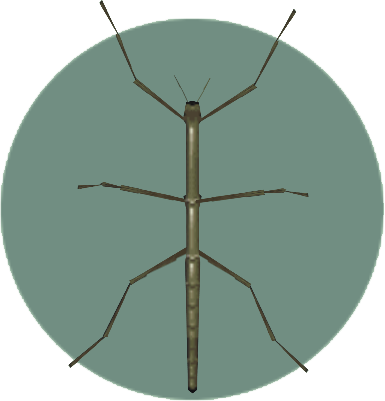 File:Walkingstick (City Folk).png