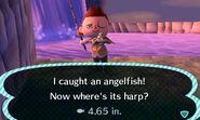 HNI 0002 angelfish