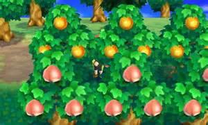 File:Fruit.jpeg