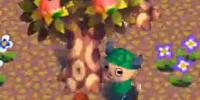 Mushrooming Season