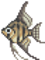 Angelfish (Wild World)