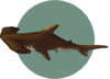 Hammerhead Shark (City Folk)