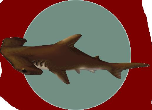 Hammerhead Shark (City Folk)