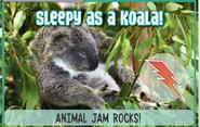 Koalajag