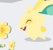 Lynx-Minibook Pet-Bunny-1