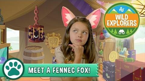 Wild Explorers - Meet a Fennec Fox!