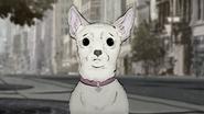 Femaledog