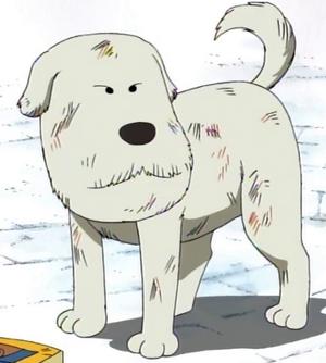 Chouchou Anime Pre Timeskip Infobox