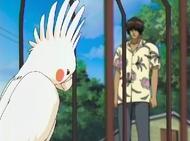 Shibata explains