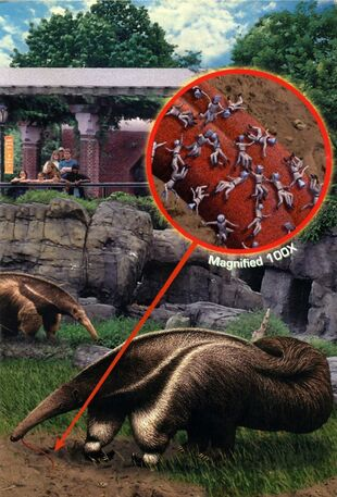 Animorphs suspicion book 24 inside cover anteater