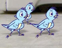 AO Birds