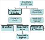 Grapefruit family