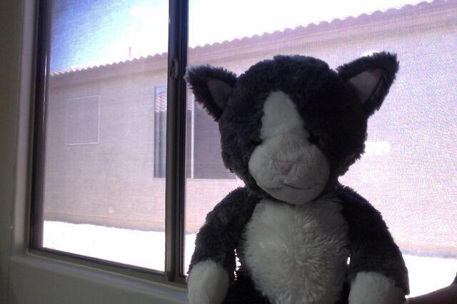 File:Gray Cat .jpg