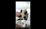 Screen Shot 2016-07-22 at 4.37.24 PM