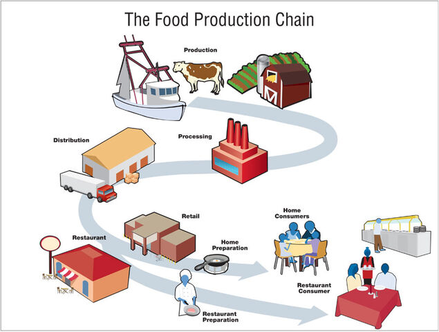 File:Food production chain 900px.jpg