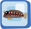 File:Fish Lawnmower Blenny.png