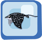 File:Fish Spotted Eagle Ray.png