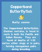 Fish2 Copperband Butterflyfish