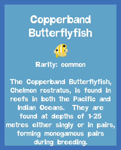 File:Fish2 Copperband Butterflyfish.png
