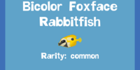 Bicolor Foxface Rabbitfish
