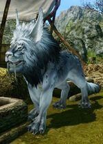 White snow lion