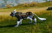 Pet armor