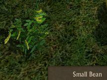 File:Bean Small.jpg