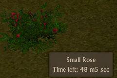 File:Rose small.jpg