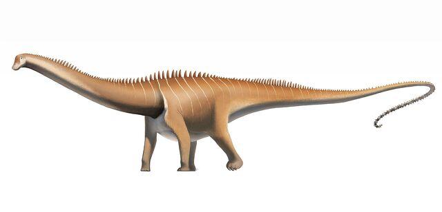 File:Diplodocus carnegii.jpg