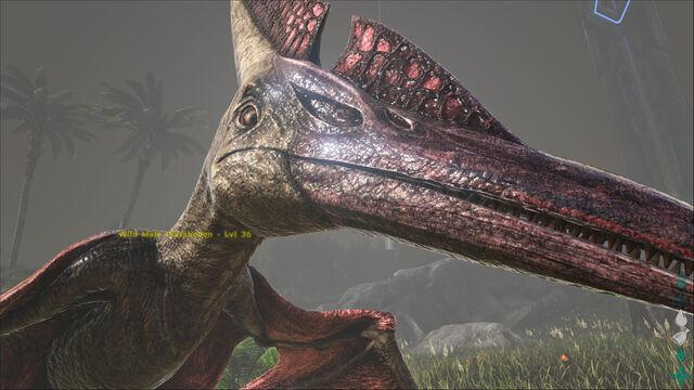 File:ARK-Pteranodon Screenshot 002.jpg