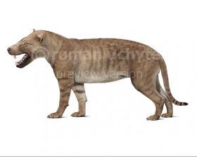 Hyaenodon-gigas-white-738x591